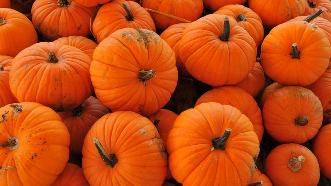 Most of Florida has very sandy soil, and adding pumpkin remains to your garden increasesthe organic matter of soil.
