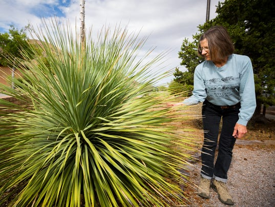 Native Plants - Dripping Springs