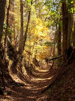 Walking along the Old Natchez Trace is like stepping back in time.