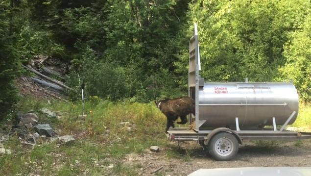 Montana Fish, Wildlife and Parks released a young male grizzly into the Kootenai National Forest Monday as part of a program to bolster the population in the Cabinet Mountains in northwestern Montana and northern Idaho.