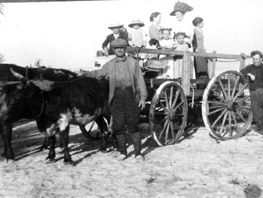 Farmers on Pine Island used mule- or ox-drawn wagons