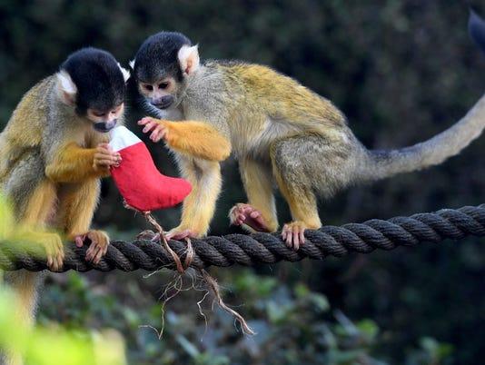 636638954139185290-monkey.jpg