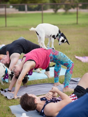 A farm in Gilbert is holding goat yoga classes.