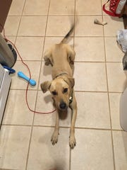 Peanut, the Coulter family dog, sits in the kitchen