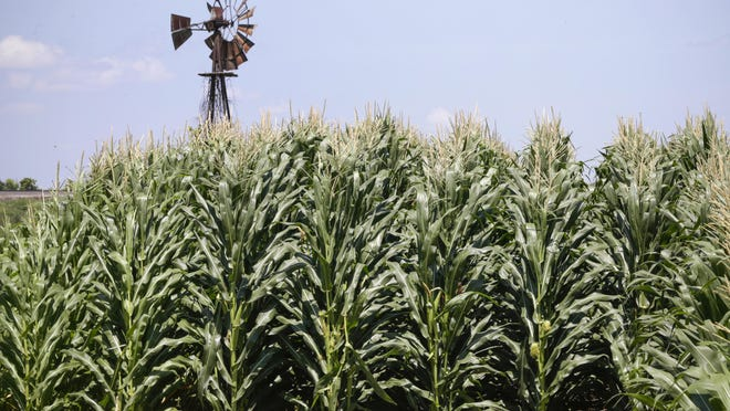 FILE - In this July 11, 2018, file photo, a field of corn grows in front of an old windmill in Pacific Junction, Iowa. President Donald Trump cast a fog of misinformation over the U.S. trade dispute with China, floating inaccurate numbers and skewed economic theories as big tariffs kicked in on Chinese goods. (AP Photo/Nati Harnik, File )
