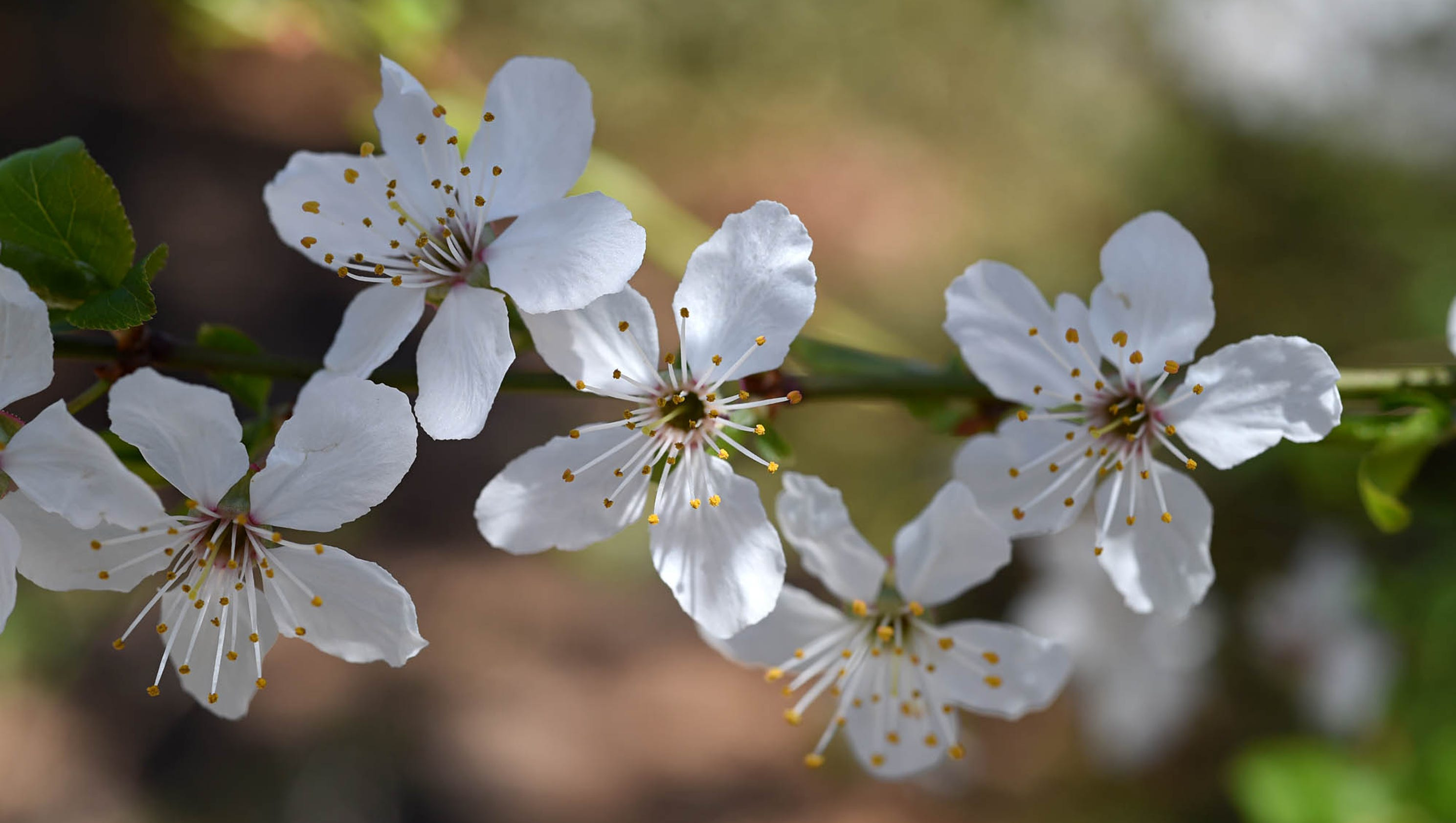 Spring F Images - Reverse Search