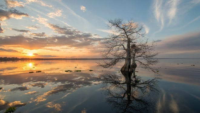 """""""Blue Cypress Lake"""" is just one of a dozen photographs by Dale Sorensen Jr., to be on display at Downtown Friday on Oct. 28 and at the New Horizons Indian River Learning Center grand opening on Nov. 10."""