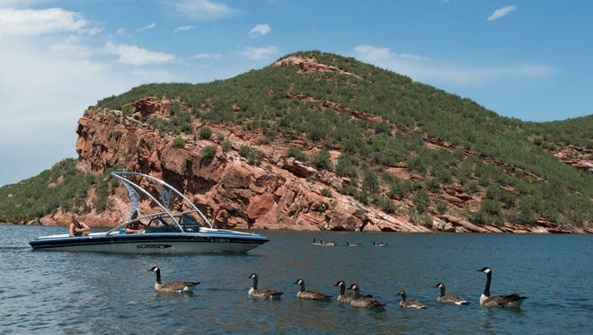 A flock of Canadian geese move into a cove on Horsetooth Reservoir Saturday, July 18, 2015.