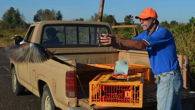 Volunteer Eric Hansen releases a pheasant at E.E. Wilson Wildlife Area prior to the October fee-pheasant season. On-site hosts provide support at both wildlife areas and fish hatcheries around the state.