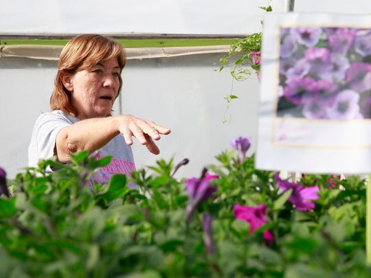 Bonnie Crane helps some customer on Thursday at the Brewer Greenhouse on Don Rovin Lane in Farmington.