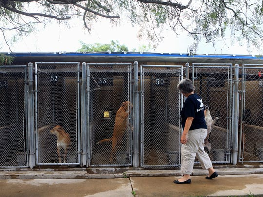 Volunteer Kimberly Rezk walks past kennels Thursday, July 13, 2017, at the PALS animal shelter in Corpus Christi. Rezk started Kanines and Kitties to raise money for food and cleaning supplies for PALS animal shelter.