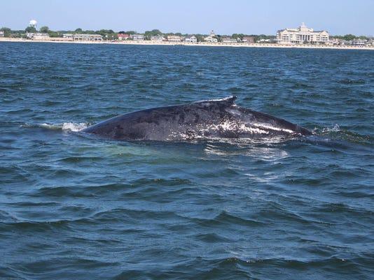 whaleoffspringlake