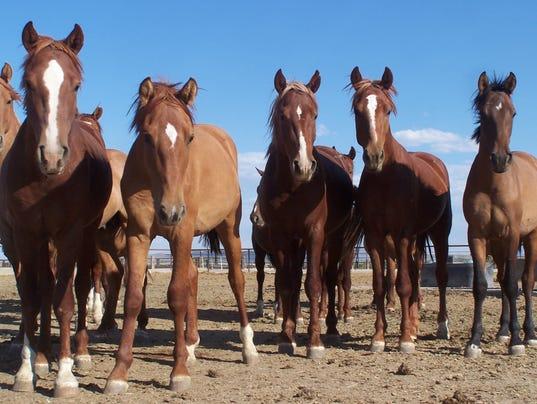 635714510230593489-wild-horses-1
