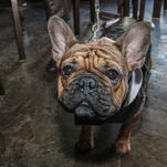 Old Hickory Whiskey Bar hosted Hooch for the Pooch III Sunday afternoon.  The event helped raise money for the Pensacola Humane Society.