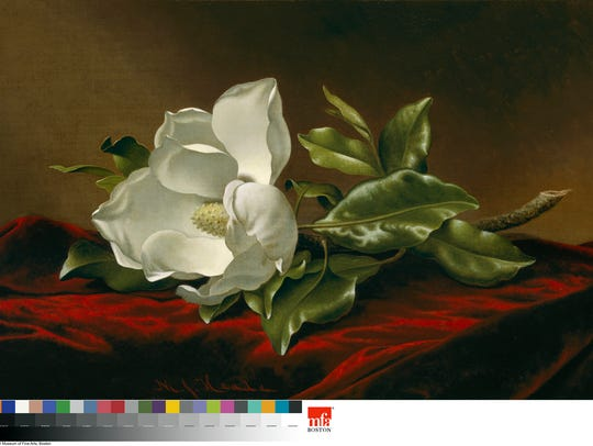 """Magnolia Grandiflora,"" an oil on canvas from the late"