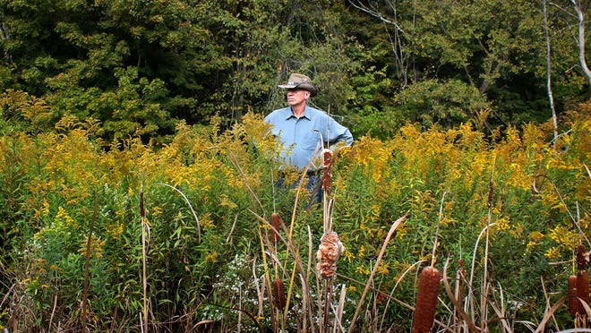 Ed Winterberg peers across the wetland being restored in Campbell County during a fall hike last week organized by the Campbell Conservancy. Federal regulations require developers to restore wetland acreage that their projects destroy, and it has become costly.