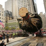 Rockefeller Christmas tree en route to NYC from Pa. farm
