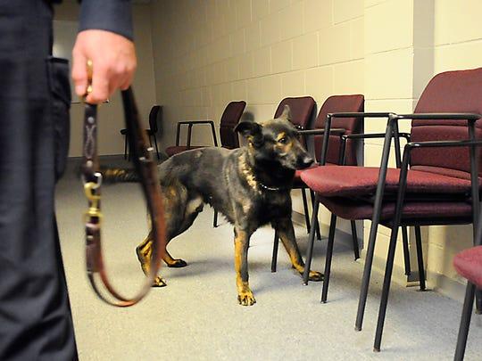 Kato, K-9 unit dog, picks up on a scent hidden between