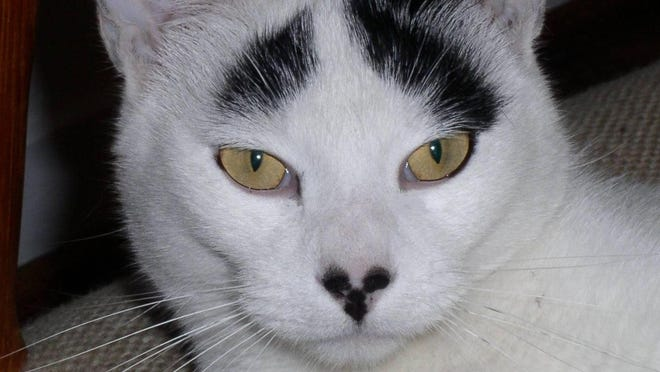 Cat Truskot