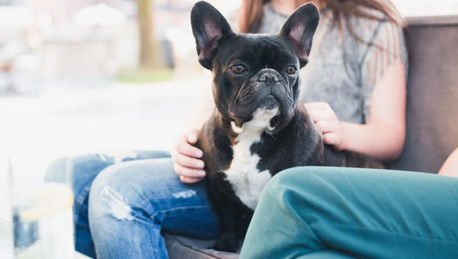 See which pet-friendly establishments 10Best readers voted as best in the U.S.