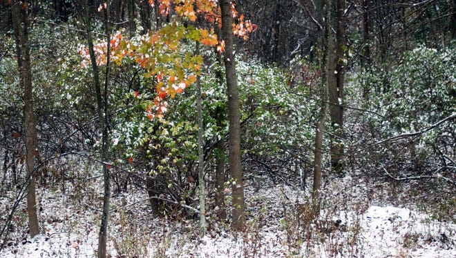 A bit of autumn and a bit of winter in Vestal, NY on Thursday, Oct. 27, 2016 after an overnight snowfall.