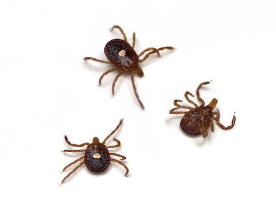 Evidence suggests that ticks and the diseases they