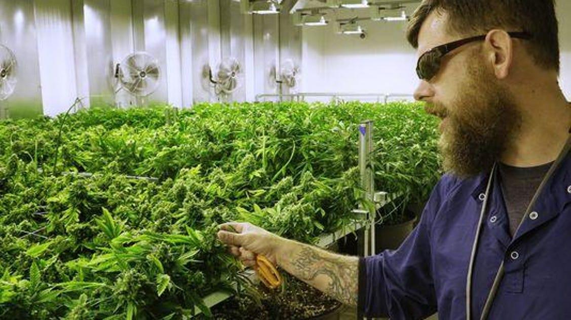 Nj S Fifth Medical Marijuana Dispensary To Open
