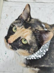 Sparkle is a loving 6-year-old calico girl who is looking