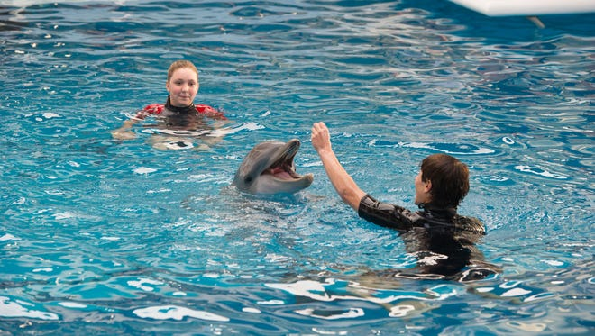 """""""Dolphin Tale 2"""" opens in theaters Sept. 12 and features the true story of Winter, a dolphin at the Clearwater Marine Aquarium in Florida."""
