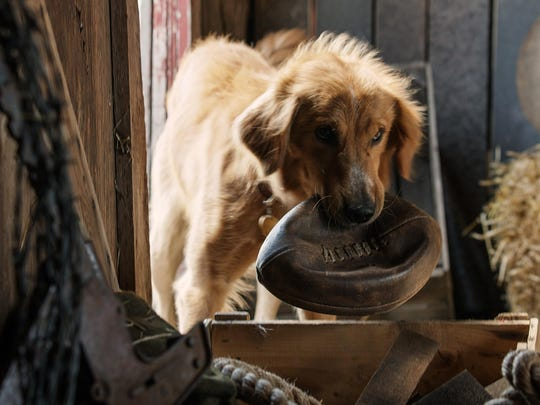 """Bailey finds his flip in """"A Dog's Purpose."""""""