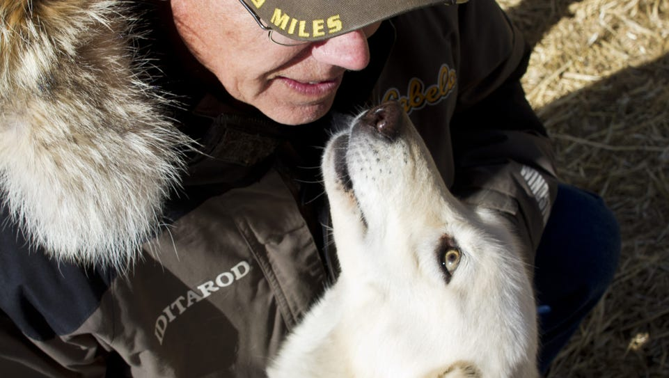 Adkins' kennel of sled dogs boasts 53 eager, affectionate