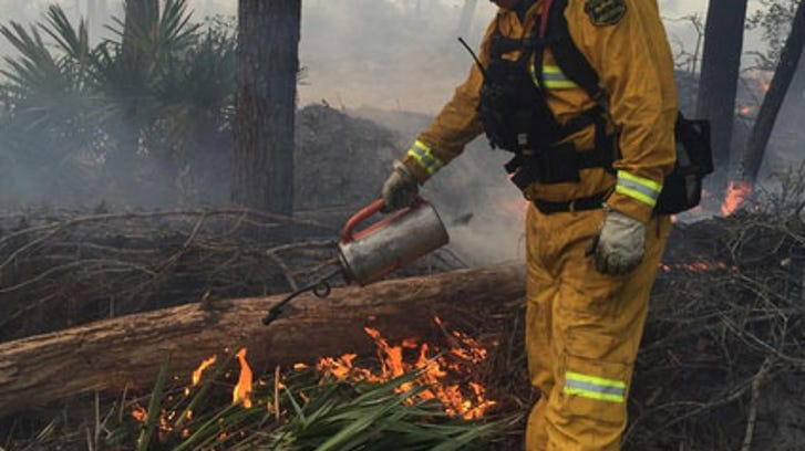 Prescribed burn planned for 315 acres at Jonathan Dickinson State Park