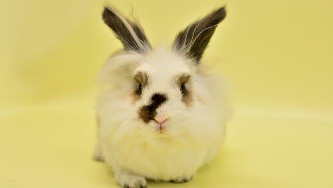 Stella the rabbit