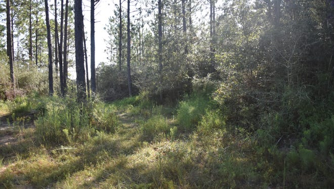 Blue Water Holdings received a permit to build and operate a construction and demolition debris facility at this vacant lot in East Milton. The land is pictured Tuesday, Sept. 19. 2017.