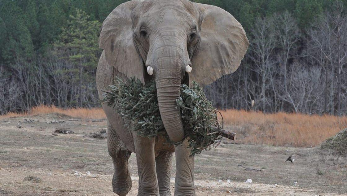 N F Elephant 2 Fairview friends happy...
