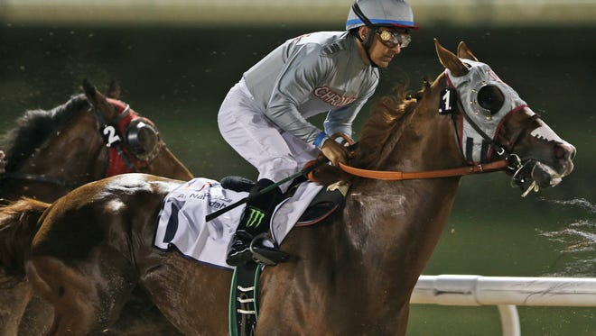 California Chrome of the U.S., ridden by Victor Espinoza races during a U.S.$ 150,000 price money race at the Meydan Racecourse in Dubai, United Arab Emirates, Thursday, Feb. 25, 2016.