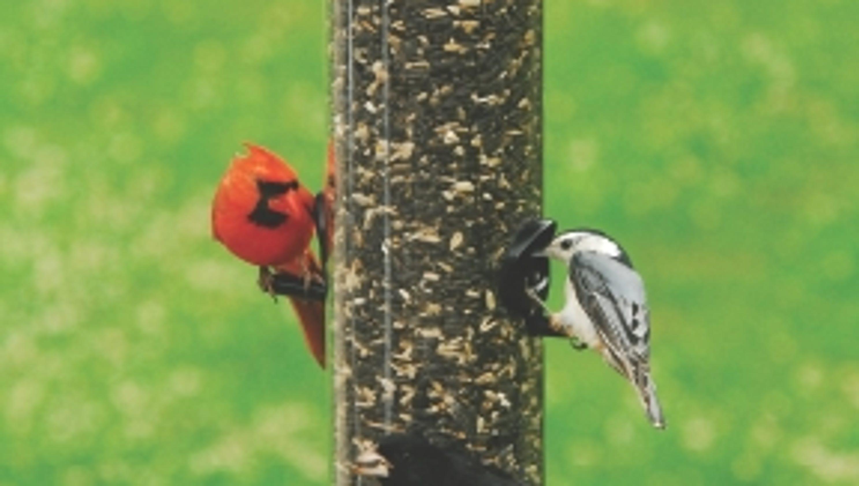 lover bird birdfeeding unlimited tray backyard feeders resources pole birds feeder mounted