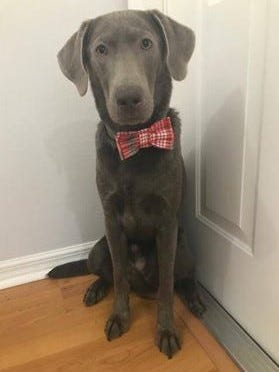 A total of 16 vendors --all local artisans --will be showcasing their new, handcrafted items such as the bowtie this dog is wearing at the Jan. 6 craft show at the Indian River Mall.
