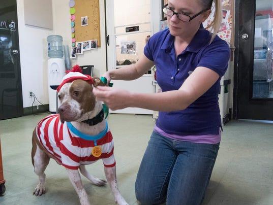 Humane Society-Dog Adoption