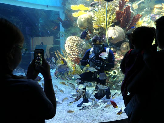 Visitors watch a diver feed fish in the Mesoamerican
