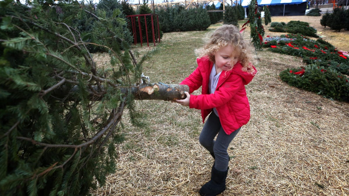 19 farms where you can cut your Xmas tree