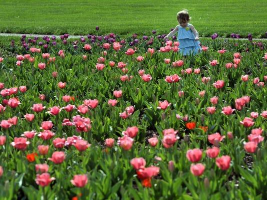 Blooms for Scene.JPG