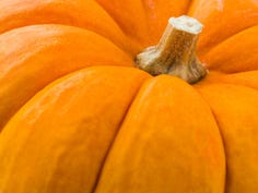 Things to do near me: Pumpkins, hayrides and fun fall festivals in Sumner County