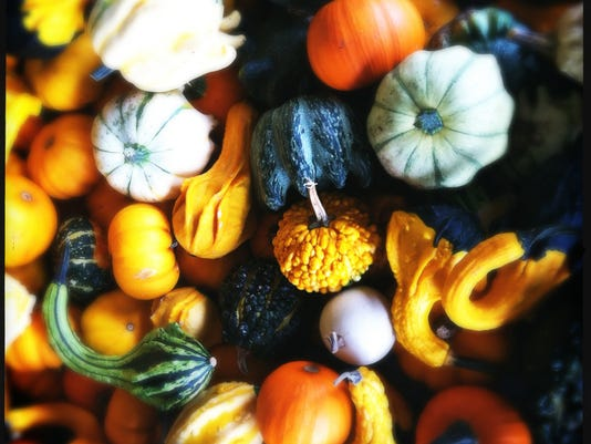 Gads of Gourds by Meegan M. Reid