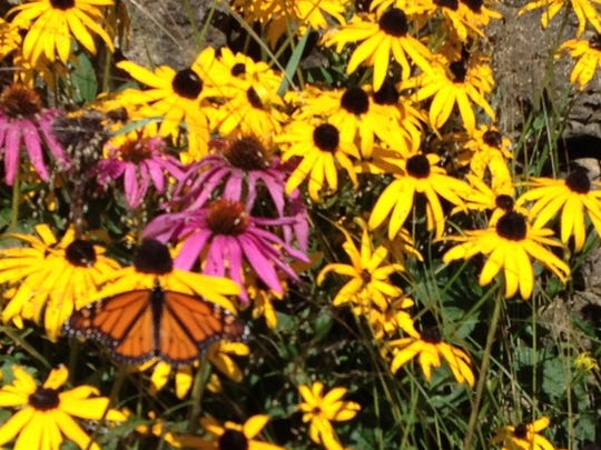 Visitors to the Peninsular Agricultural Research Station on Saturday had a chance to tour the Door County Master Gardeners Association's butterfly garden.