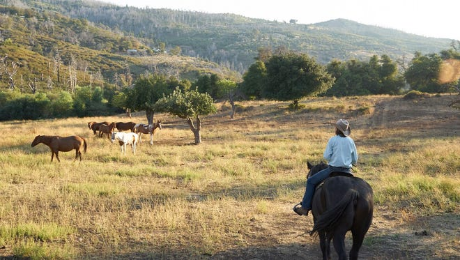 At Kenner Horse Ranch, amble through grassy fields, old oak groves and  shady pine forests.