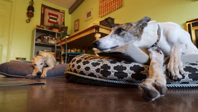 Karyn Zoldan, an advocate for greyhound adoptions, says adopting the dogs has changed her life and made her more outgoing.