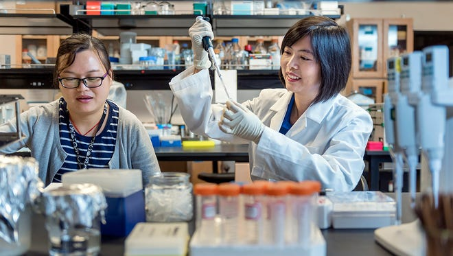 Visiting Chinese scholar Li Chen, left, assists as lead researcher Iris Gao prepares a sample of DMDD powder to make the solution used in breast cancer research at MTSU.