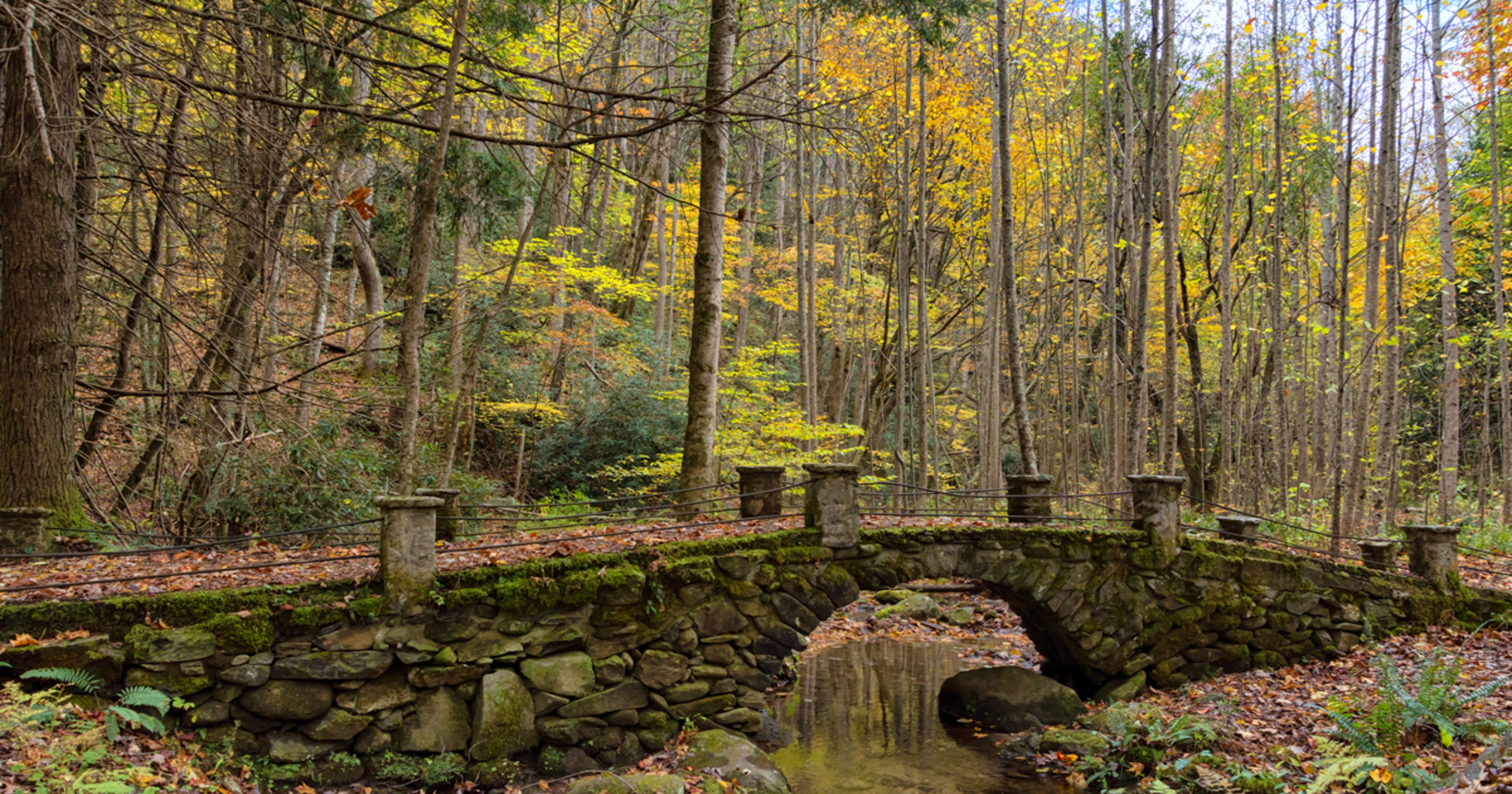 Fall colors at peak in Tennessee Valley this weekend