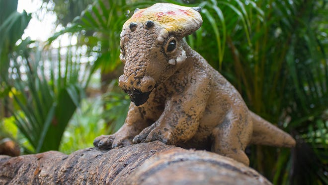 A Diabloceratops hatchling at Brevard Zoo.